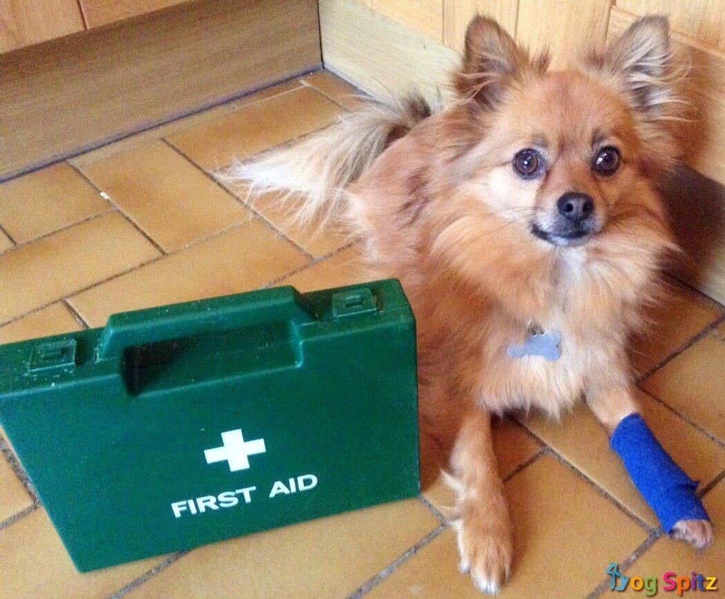first aid spitz