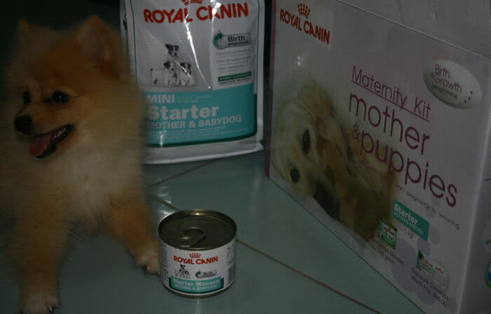 royal canin для шпицев